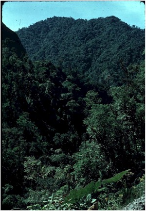 Neotropical vegetation on ridges and peaks