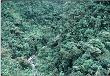 Dense and tall vegetation on very steep slopes beside whitewater river